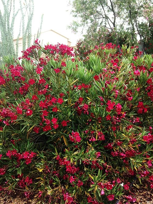 Easy care southwest landscaping plants