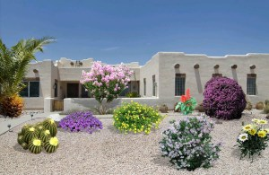 Colorful Xeriscape Plants