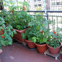 Vegetables Gardening Tips