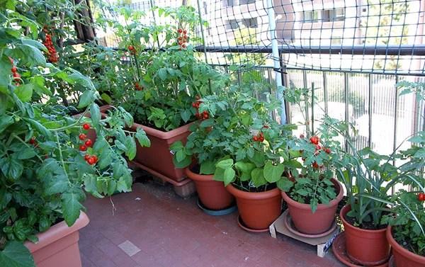Vegetables Gardening Tips