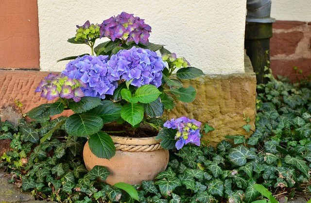 Creating an Allergy-Free Garden for the Home