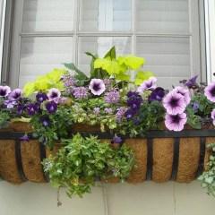 flowering-window-box-image