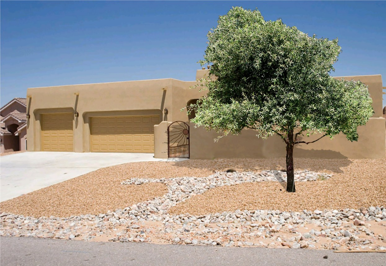 Shade trees for the Desert Southwest