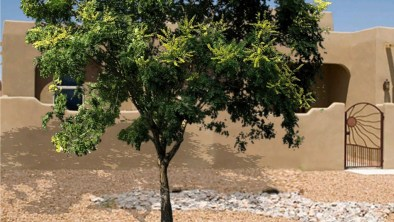 golden-rain-tree-front-home