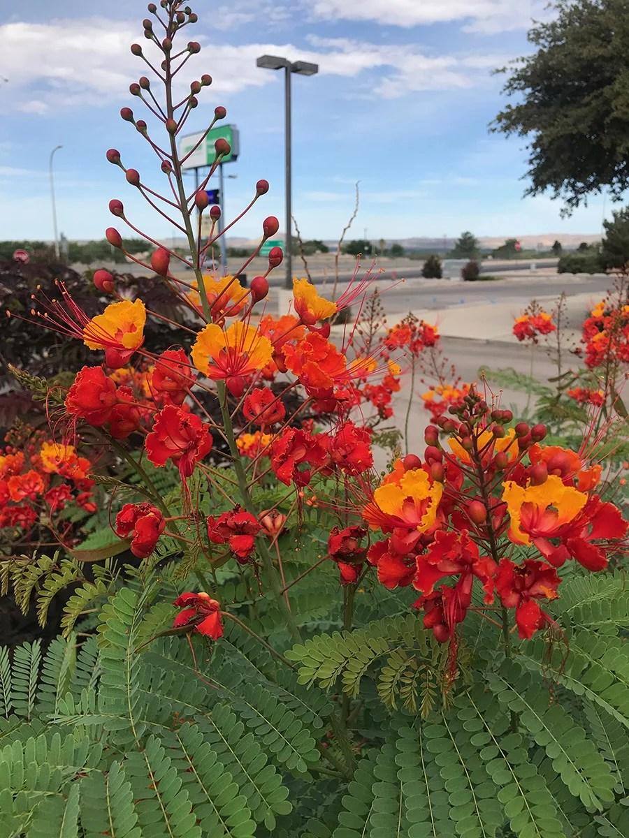 Guzman's Garden Centers in Las Cruces, NM.