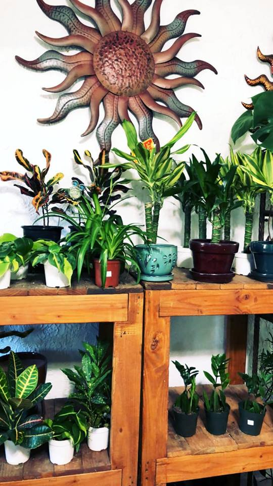 Gardening Gift Ideas for the Gardener