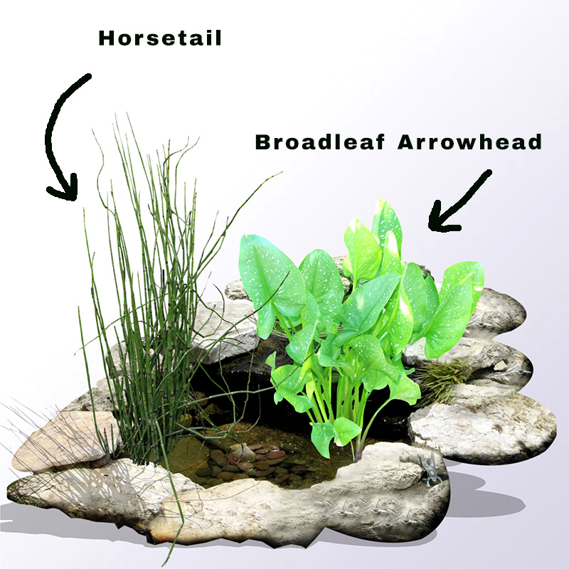 Aquatic Plants For Small Ponds: Water Plants Small Ponds
