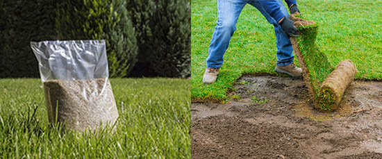 Sod and Lawn tips for the Southwest
