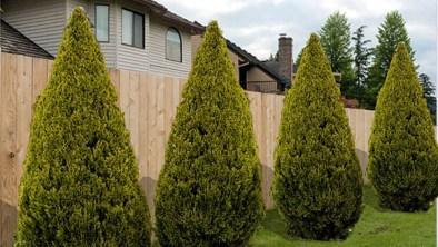 How to block neighbors view of my yard