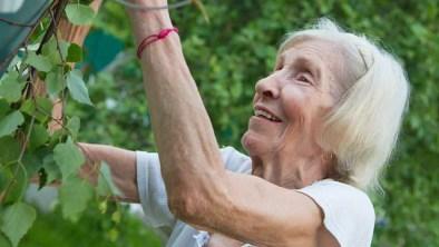 Gardening For Older Generations