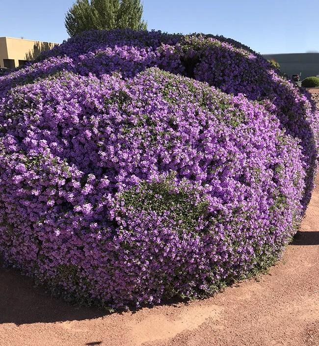 Southwest Gardening Tips