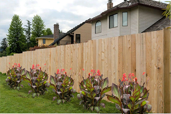 Landscaping with Canna lilies