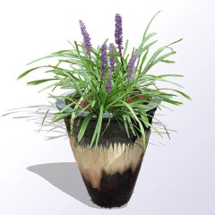 liriope-in-pot2