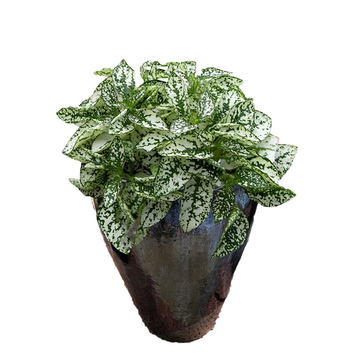 Colorful Houseplant Leaves - for Indoor Decoration