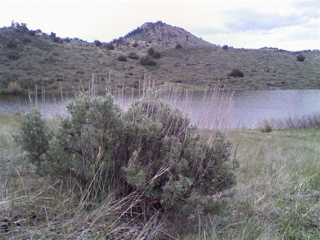 Mountain Sagebrush, Riddle Lake 5/27/09