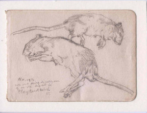 David Jones, 'Rats' (pencil sketch)