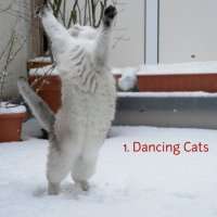 gwendalperrin.net playlist 1 dancing cats