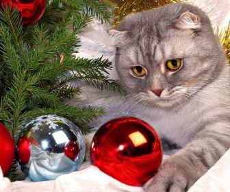 gwendalperrin.net cat cute christmas sapin