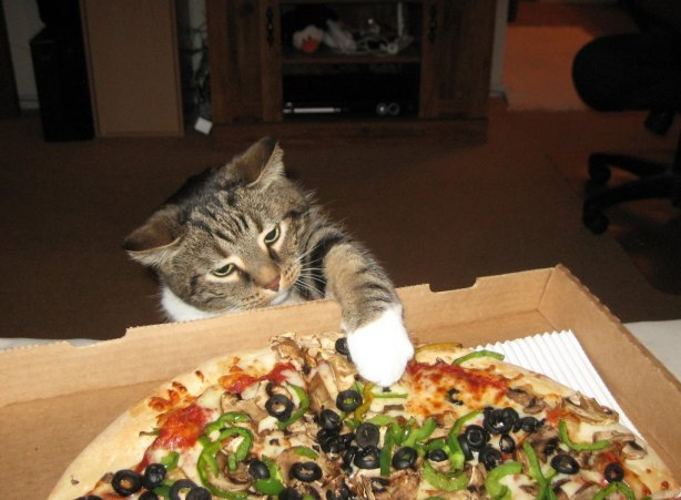 gwendalperrin.net cat pizza chat