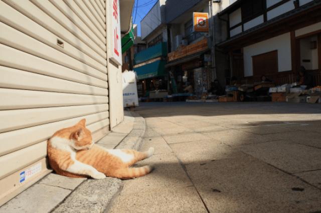 gwendalperrin.net japon cat lobby félin kadarashima