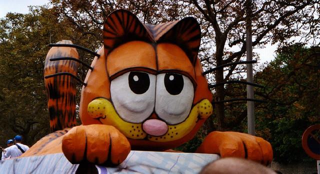 gwendalperrin.net kattenstoet ypres chat lobby félin (3)