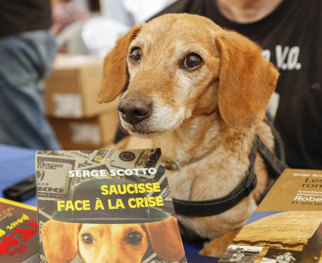 gwendalperrin.net saucisse marseille chien