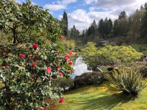 Camellia bush in front of pond with pine trees in background