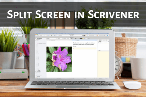 laptop on desk displaying Scrivener in split screen mode, entitled Split Screen in Scrivener