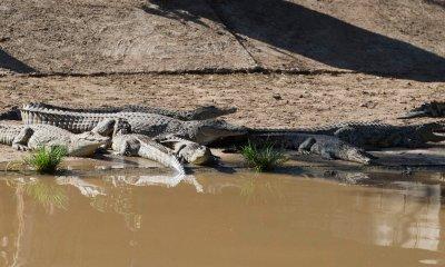 Dozens of crocodiles escape farm in South Africa