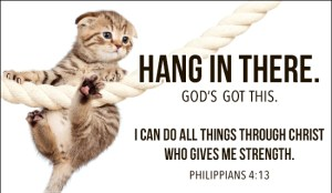 cat - hang in there
