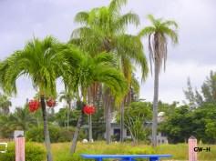 Palm trees in Bahamas