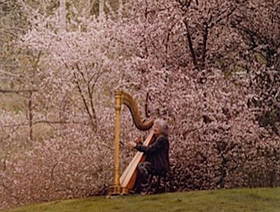 Gwyneth Plays the harp under a Cherry Tree
