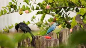 Birds on the fence...