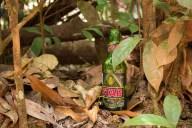 Stag in the bush