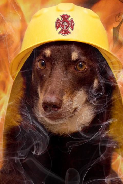 【甲種防火管理者、防災管理者】講習のみで取得可能な国家資格!