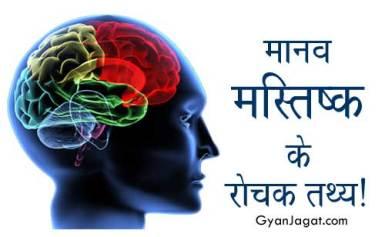 मानव मस्तिष्क के रोचक तथ्य!
