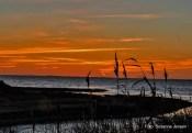solnedgang-sus