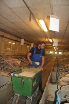 Dan Jørgensen_fodrer svin