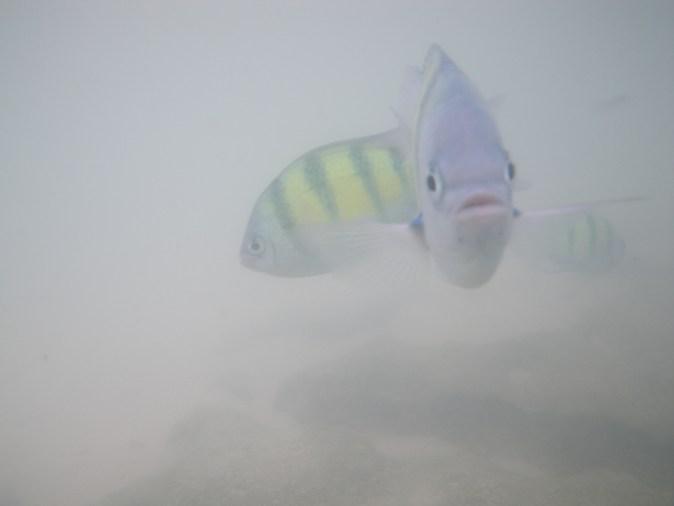 staring fish
