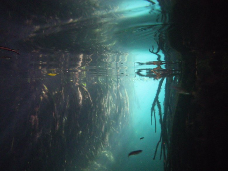 roots in cenote cristalino