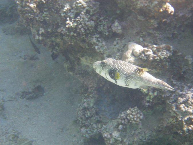 a round fish