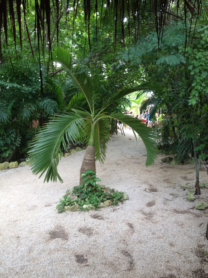 a palm at the entrance