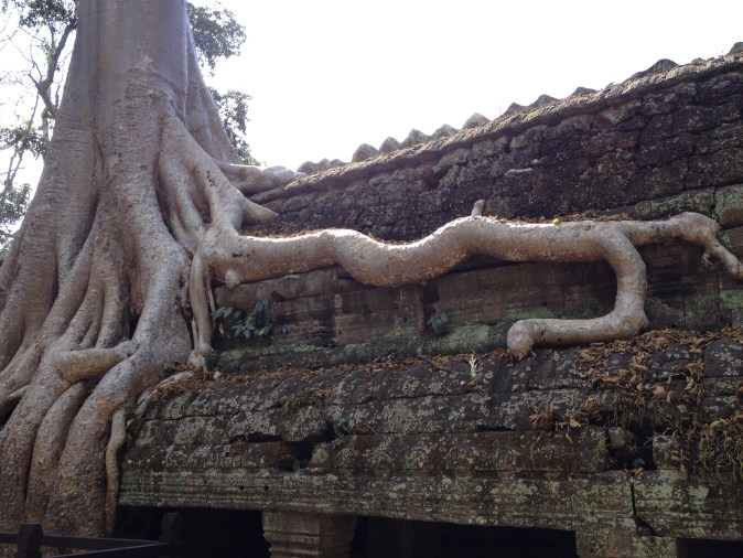 thick roots on ruin