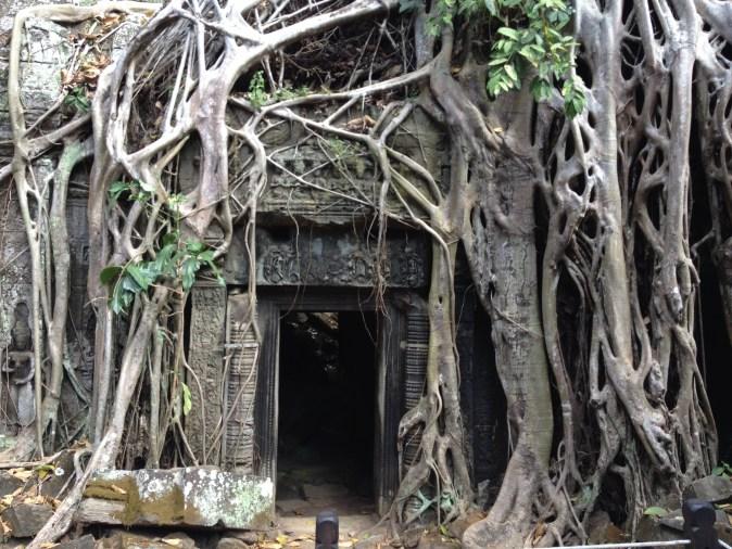 port omgiven av rötter