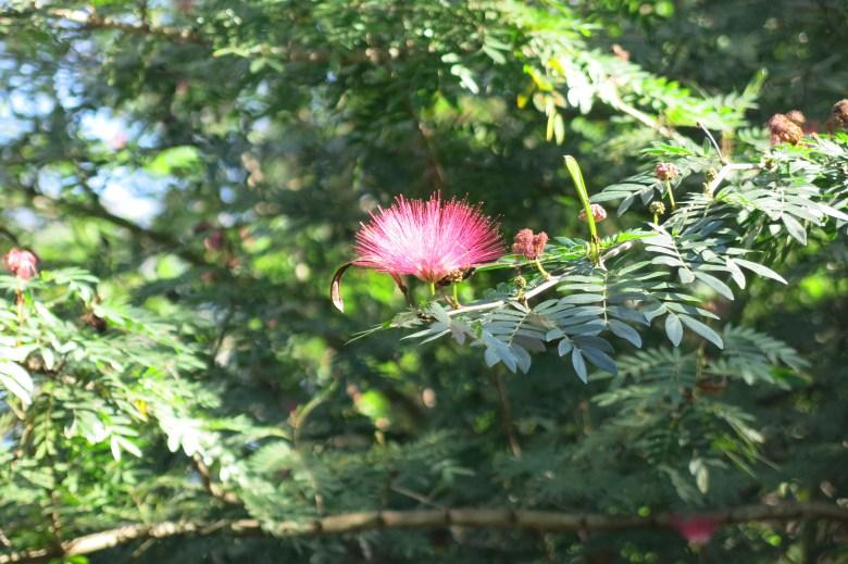 blomma på träd