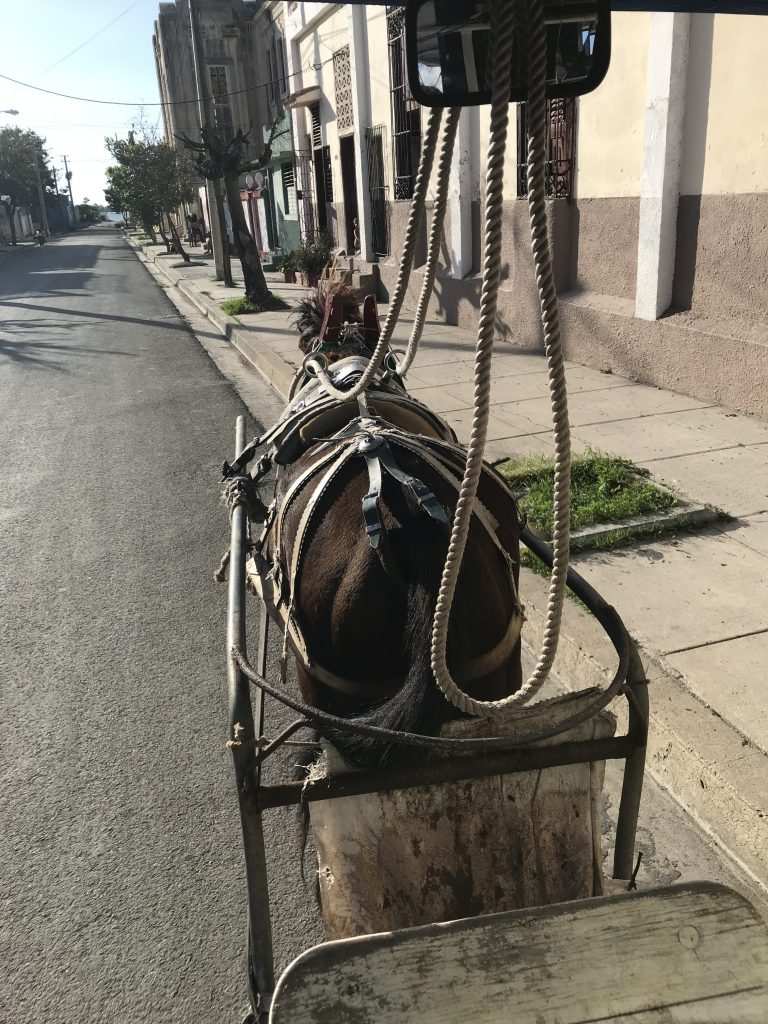 horse withoout a driver