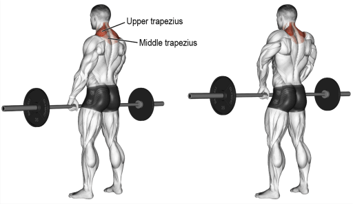 best exercises for traps