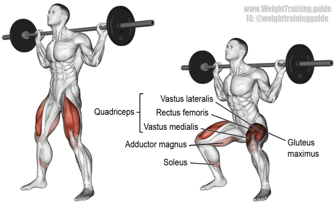 barbellsquat quads exercises
