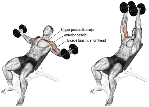 chest exercises with dumbbells