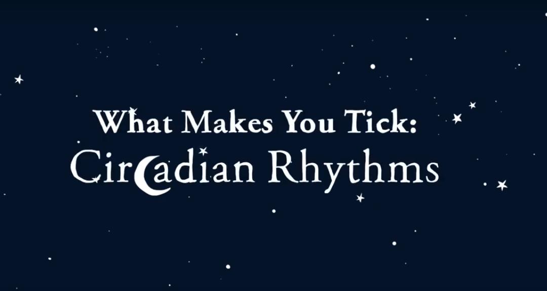 What Makes You Tick Circadian Rhythms